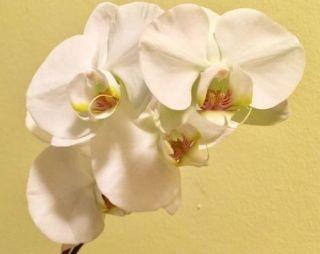 manter uma orquídea viva